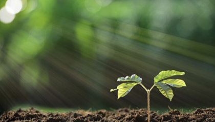 Soli-Soil